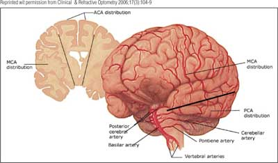 Intro to brain - Psychological And Brain Sciences 100 with Me at ...