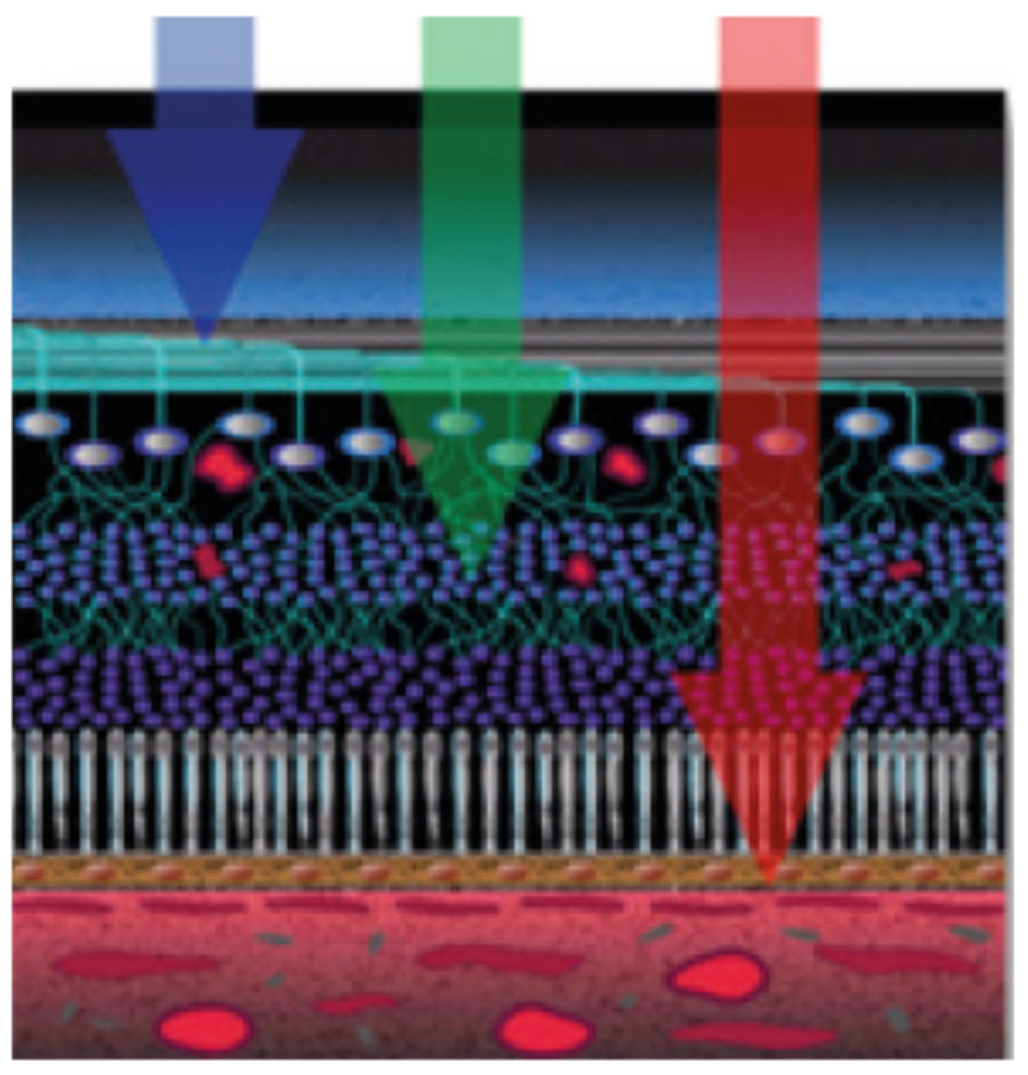 Fig. 9. Multicolor images help visualize separate layers of the retina by using different wavelengths.